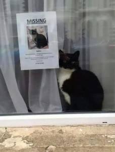 cercasi gatto scomparso annuncio