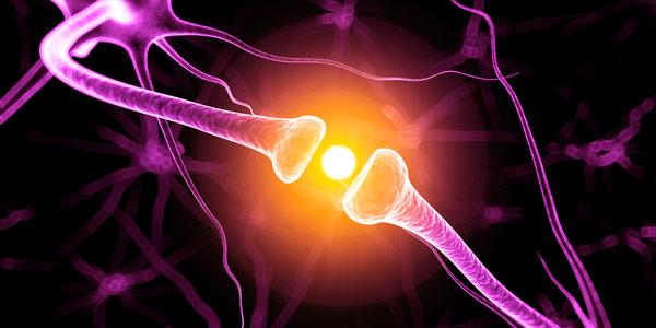 Cervello artificiale creato in laboratorio da cellule staminali