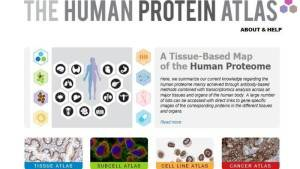 Atlante delle proteine per studiare i segreti del corpo umano