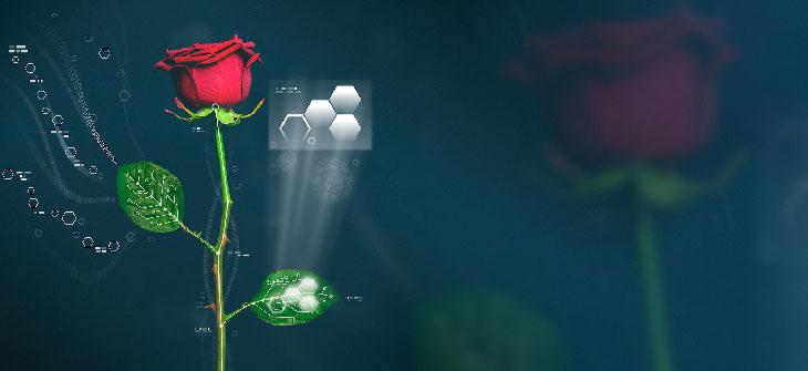 piante elettroniche