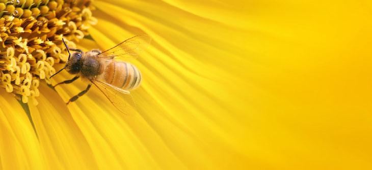 allarme terrorismo le api per combattere l'allarme terrorismo