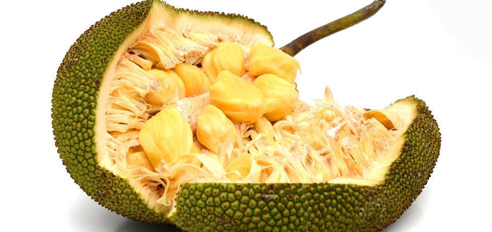 Jackfruit è ricco di carboidrati e varie sostanze nutritive, potrebbe risolvere il problema della fame nel mondo