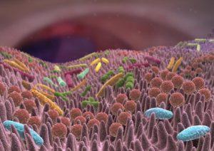 Prevenzione malattie metaboliche, come l'aterosclerosi o il diabete di tipo 2, potrebbe essere utile un vaccino messo a punto da ricercatori