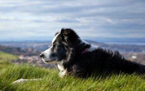 Cap, il cane magico con poteri magici