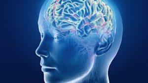 Invecchiamento cerebrale, Cervello invecchia precocemente con l'obesità