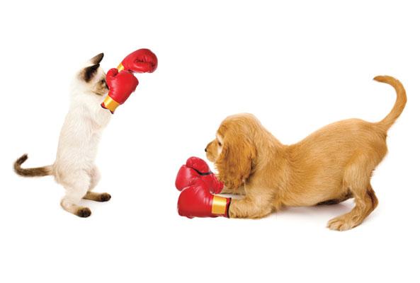 Gatto di nome Baby aggredisce sette pitbull perchè si erano avvicinati troppo al giardino