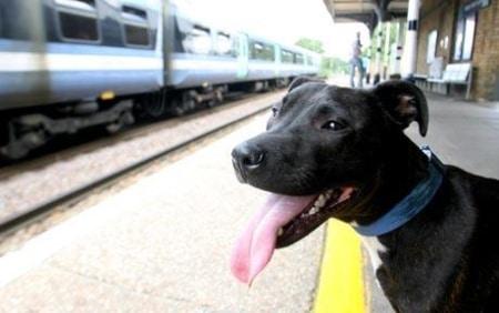 Cane prende il treno