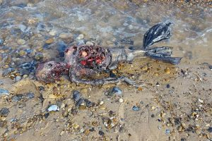Creatura misteriosa trovata sulla spiaggia