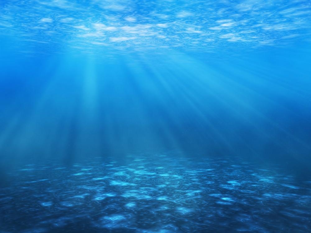 Osservato il più piccolo predatore degli oceani