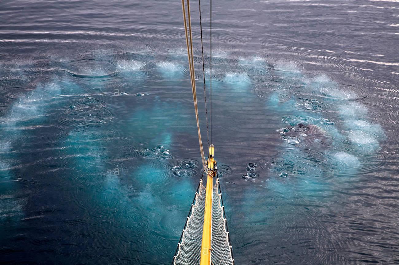 Come cacciano le balene, svelata la strategia 1