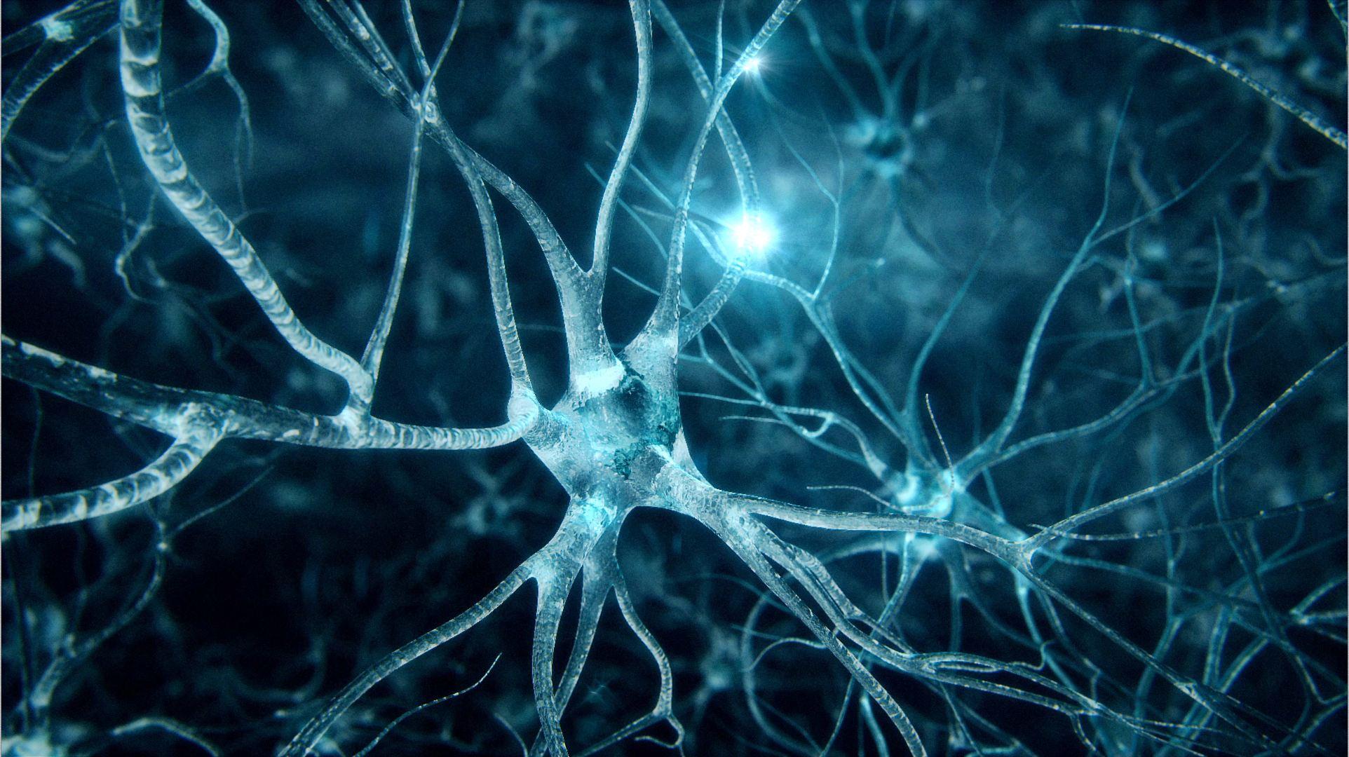 Controllare con la luce il funzionamento del cervello