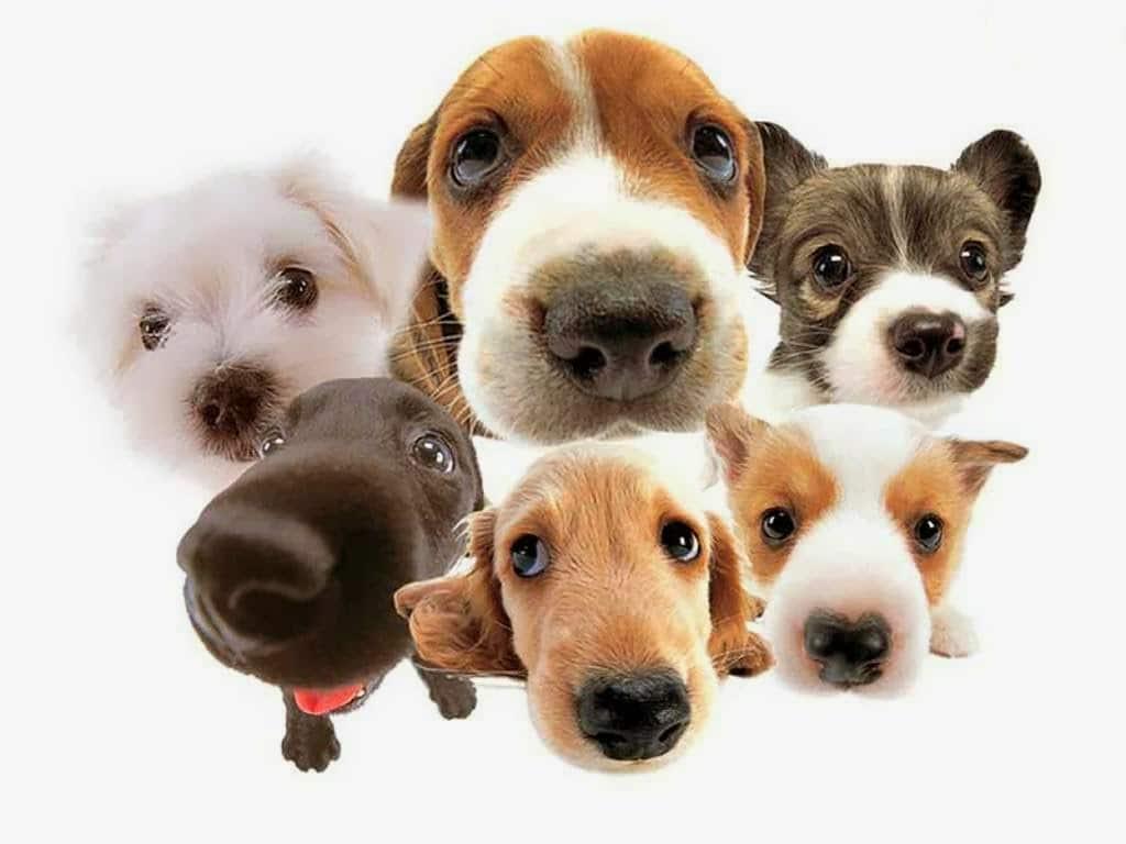 Crisi epilettiche i cani le fiutano un ora prima che arrivino