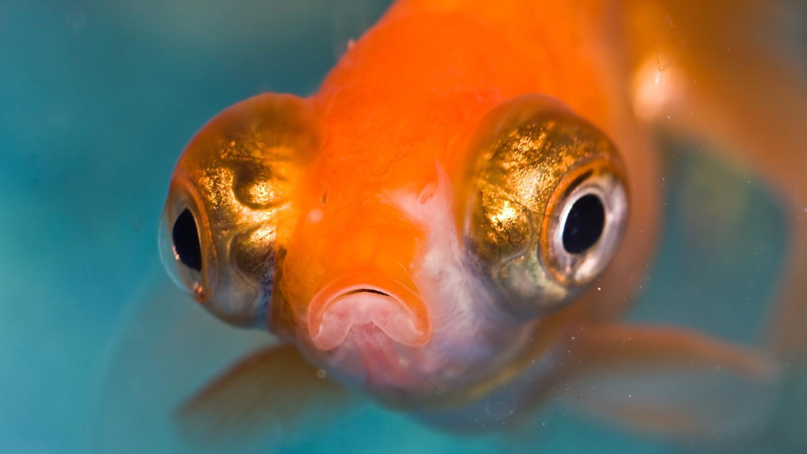 I pesci sentono dolore lo studio di Lynne Sneddon