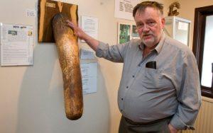 museo del pene fondato da Sigurður Hjartarson Misure del pene, in aumento le richieste di correzione dei genitali, vedi le STATISTICHE delle dimensioni del pene pene più lungo al mondo