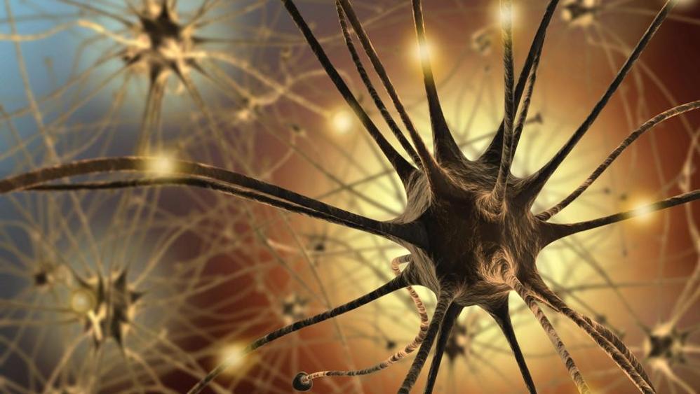 Neuroni del cervello, si addormentano a turno
