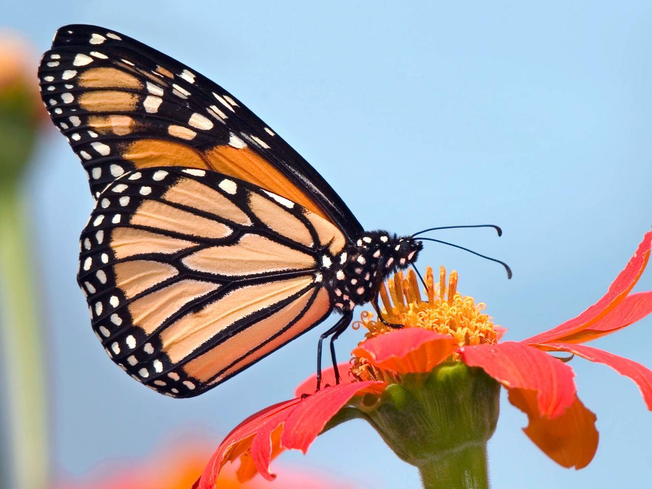 Nuova generazione di tessuti elastici che si ispirano alle ali di farfalla