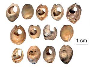 Trovate collane di conchiglie e gusci risalenti a 80.000 anni fa 1