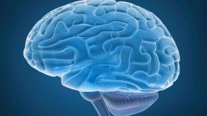 Cervello, circonvoluzione fusiforme è l'area che continua a crescere da adulti