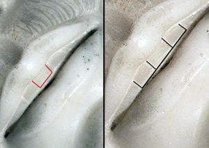Dente del peccato, un dettaglio intrigante nel Cristo di Michelangelo