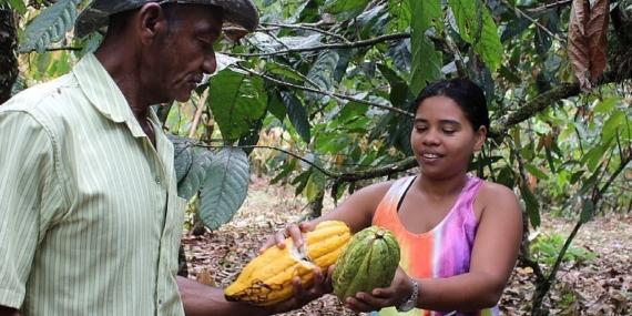 Cacao estinzione dal 2020, la crisi