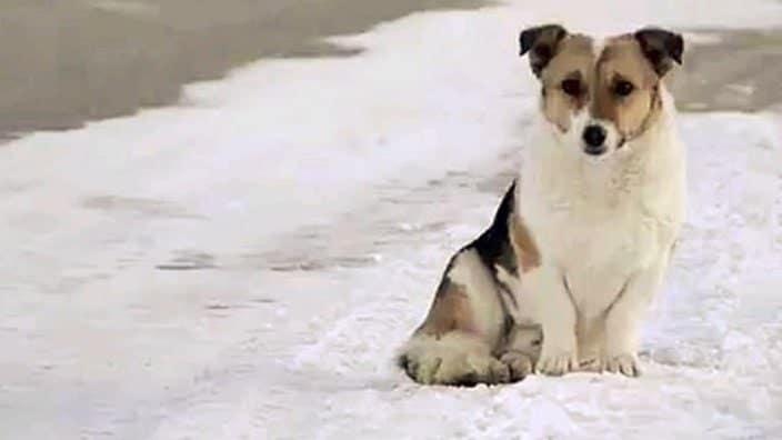 Cane abbandonato in siberia a -30°C aspetta sei mesi il ritorno del suo proprietario