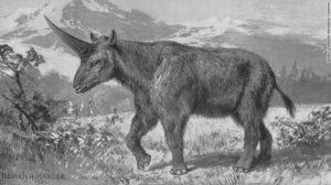 unicorno 02 elasmotherium exlarge 169