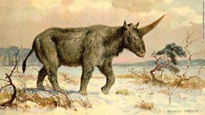 unicorno disegno immagini Unicorno origine e mitologia di questo animale realmente esistito in siberia