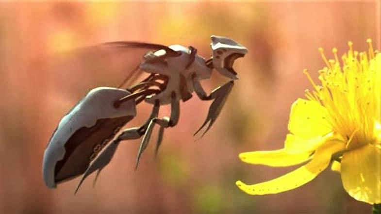 api droni, scomparsa delle api